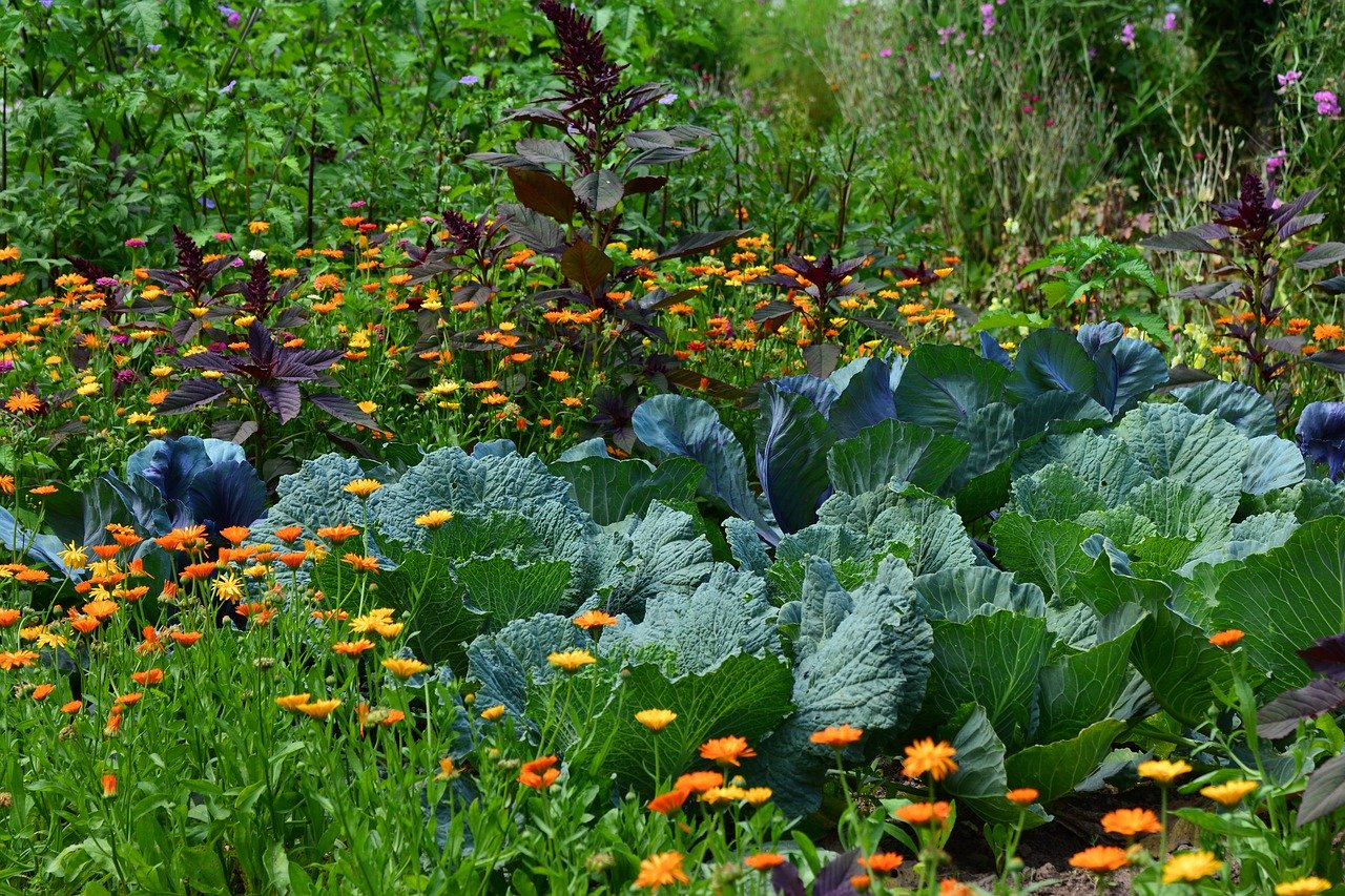 How Do You Plant and Grow the Perfect Garden Bed in the Midst of a Pandemic?