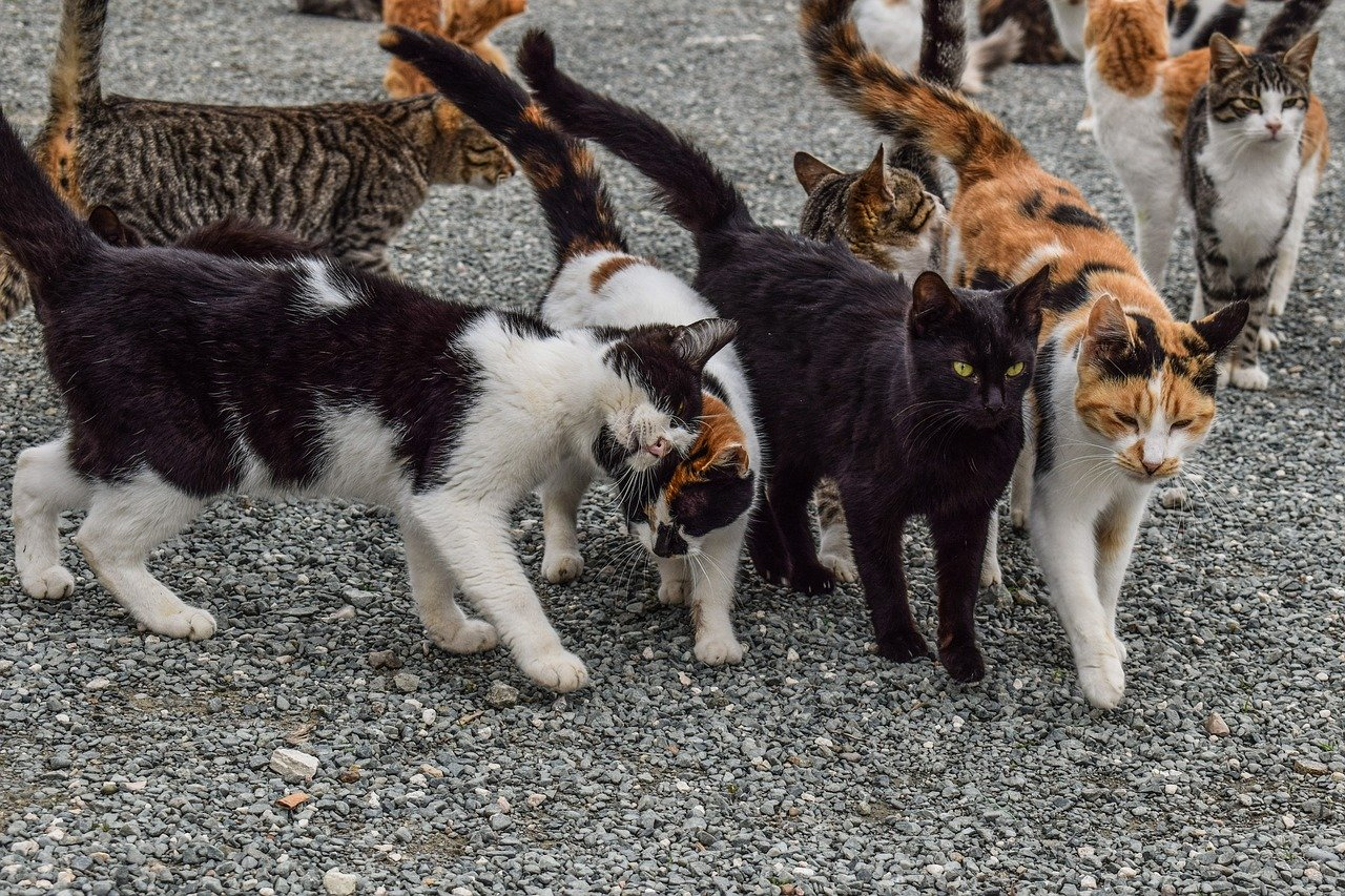 Assembling a Team of Cats for the Acreage